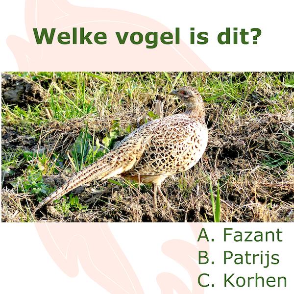 Jachtexamen vraag: fazant, patrijs of korhoen?